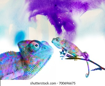 chameleons - and colors on white background
