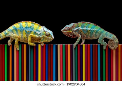 Chameleons panther facing each other show the beauty of their color on colored pencils, chameleon panther image