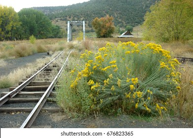 Chamisa blooms along the abandoned tracks that run through Pagosa Junction, Colorado, now a ghost town.