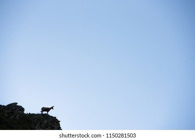 Chamois silhouette on the rock - ble edit space