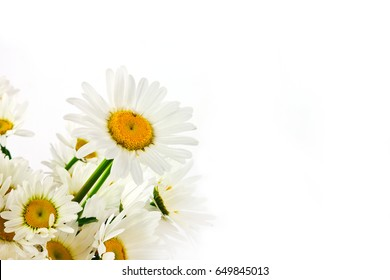 Chamomile in a bouquet on a white background