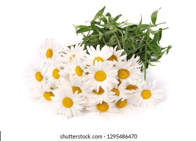 Chamomile flower beautiful and delicate isolated on white background