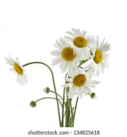 chamomile flower bouquet isolated on white background