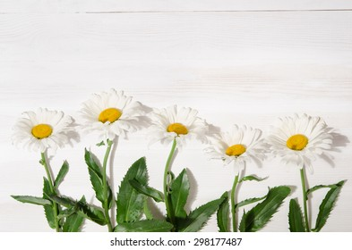chamomile flower on white wood table