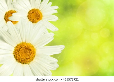 chamomile flower in yellow blurred bokeh background
