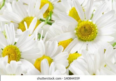 Chamomile flowers background image
