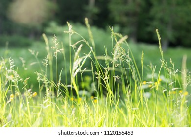 Chamomile flowers field sunlight. Summer daisies. Beautiful scene of nature with blooming medical chamomile.