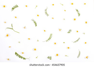 Chamomile flowers and green leaves pattern on white background. Top view. Flat lay.