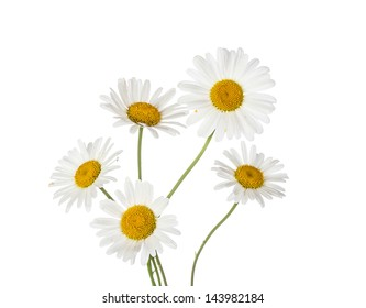 chamomile flowers isolated on white background