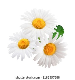 Chamomile flowers with leaves composition isolated on white background as package design element