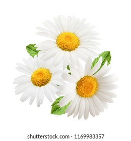 Chamomile flowers with mint leaves composition isolated on white background as package design element