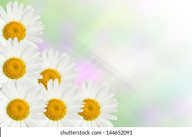 chamomile flowers on blurred abstract background
