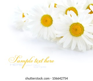 Chamomile flowers on a white background with space for text