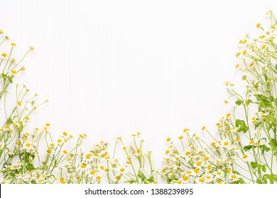 Chamomile flowers on white background. Flat lay.
