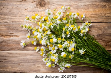 Chamomile flowers on a wooden background. Studio photography.