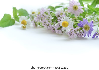 chamomile and herbal flowers in white background