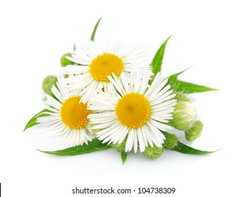 chamomile with leaves on a white background