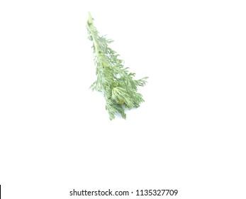 chamomile medicine on a white background