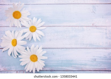 Chamomile on a light blue old wooden background top view. Delicate floral card with space for text.