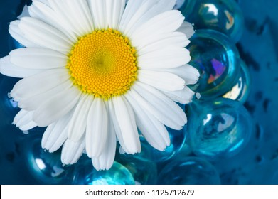 Chamomile on the Water