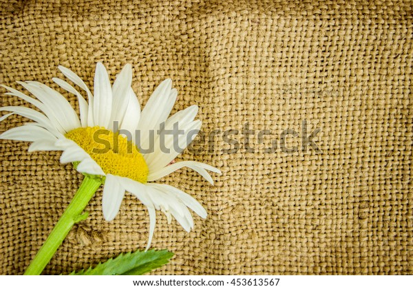 chamomile on wooden background. divination.