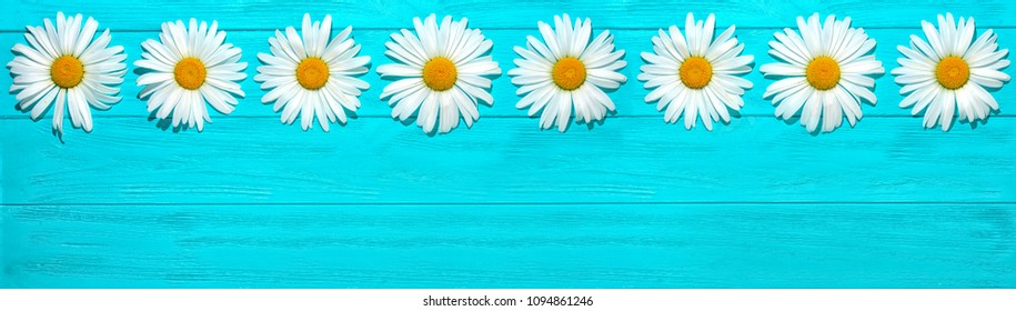 Chamomile on a wooden blue background, top view.
