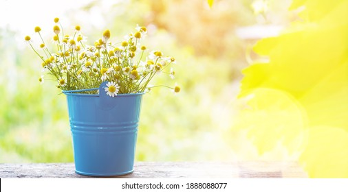Chamomile plant bloom herbs lying on a stone desk ina spring garden. Copy space