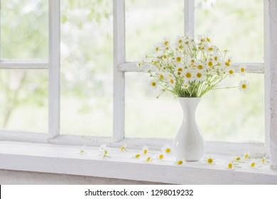 chamomile in vase on windowsill