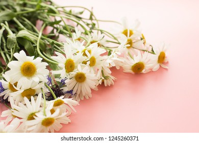 chamomiles daisy  spring summer fresh and cornflowers bouquet  on pink bright light gentle background postcard