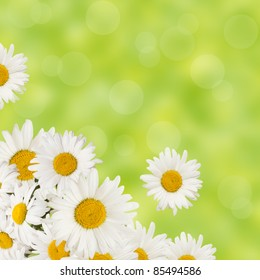 chamomiles flowers border on fresh green background