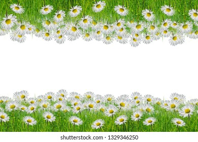 chamomiles frame,great as a background,web banner