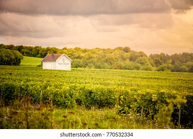 Champagne vineyards, France. August 9, 2017. Veuve Clicquot Ponsardin is one of the world's largest champagne producers (maison) based in Reims, in the Champagne-Ardenne region.