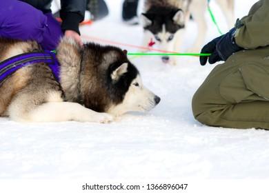 "Championship and championship of Sakhalin region in riding sport ""Snow Drive Sakhalin - 2019""."