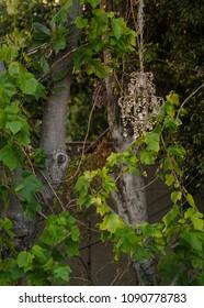 chandelier hanging on tree