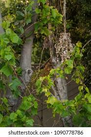 Chanderlier Hanging On Tree