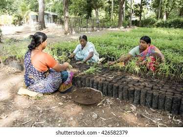 CHANDRAPUR, MAHARASHTRA, INDIA, OCT 20 : Unidentified group of women transplanted Bamboo Plant, they working at Bamboo Plant Nursery of forest department, Maharashtra, India ,20 October 2015.