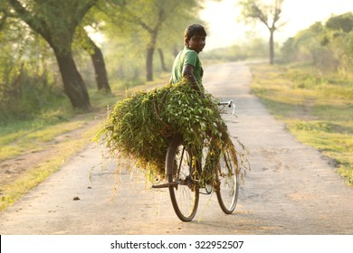 CHANDRAPUR,MH,INDIA - OCTOBER,2013 : this village teen age boy carrying grass on his bicycle at outskirt of chandrapur district, Maharashtra,he shouted and requested us to take his picture