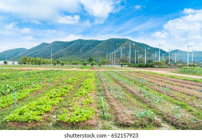 Chang Hua Mun Royal Initiative Project, Windmills alternative and sustainability of energy from nature with farm land at Phetchaburi province,Thailand