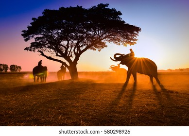 Chang Thailand with nature at sunset.