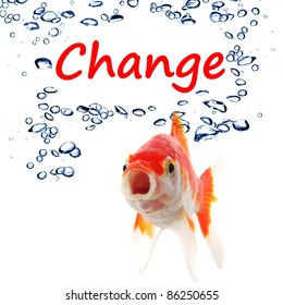 change ahead or future concept with word and goldfish