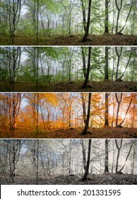 Change of four seasons in the forest panorama, spring, summer, autumn, winter