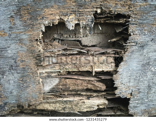 Change Texture State Process Decay Door Stock Photo (Edit Now ... on