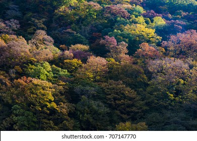 Changing color leaves on mountain at morning, Japan