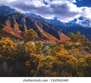 The changing fall/autumn leaves explode in a rainbow of color in the Wasatch front mountains, just above salt lake city, Utah, USA.