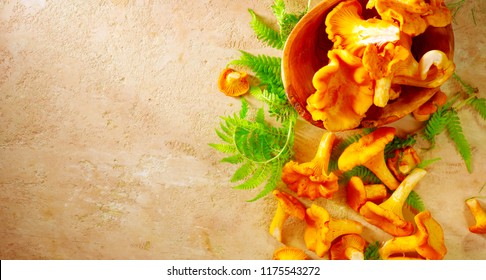 Chantarelle. Raw wild chanterelles mushrooms on old rustic background. Organic Fresh chanterelle border background on a table. Label design