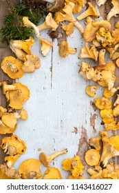 Chanterelle mushrooms close up/top view