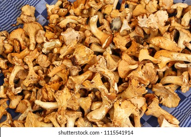 Chanterelle mushrooms at a local market in Amsterdam, Netherlands.
