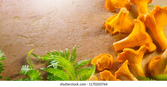 Chanterelle mushrooms, Raw wild chanterelles mushroom on rustic background. Organic Fresh chanterelle on a table. Border design