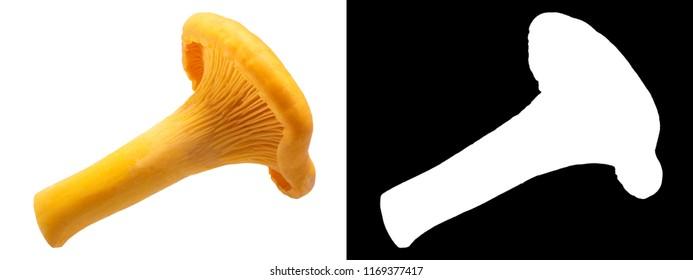 Chanterelles or girolles mushroom (Cantharellus cibarius)