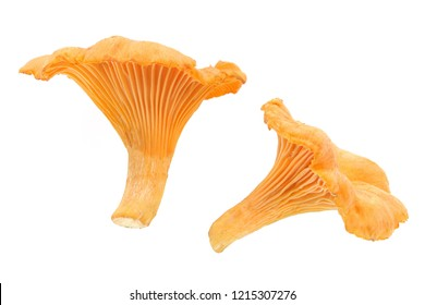 chanterelles or girolles mushrooms